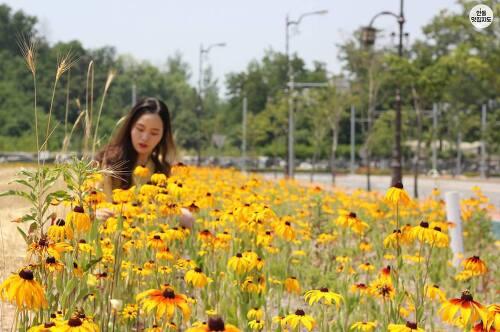 안동 온뜨레피움 유교랜드 근처 루드베키아 꽃 밭
