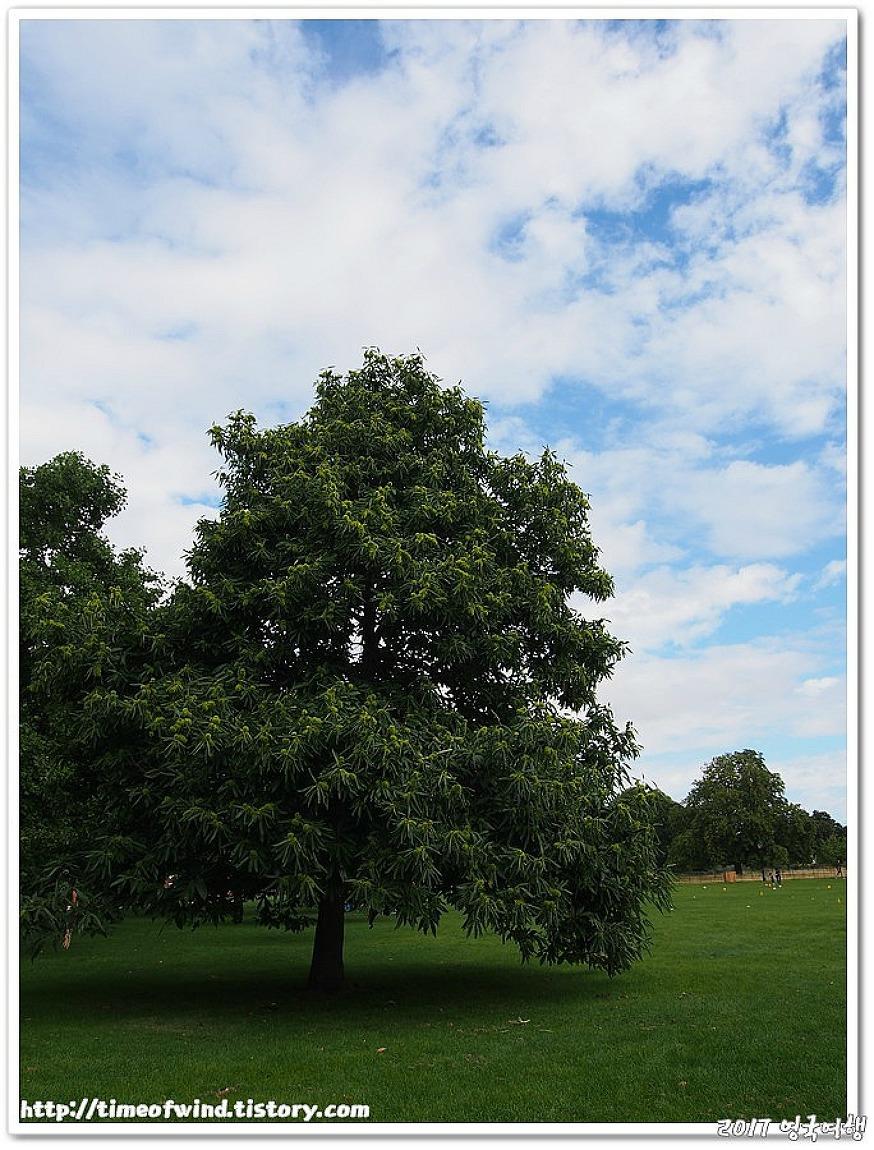 2017 영국 런던 켄싱턴가든(kensington garden) 하이드파크(hide park)