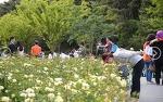 울산대공원 장미축제 2017 울산에서 꼭 가보아야할 장미향 가득한 축제