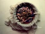 신비한 묘약, 폐와 목건강을 위한 배도라지 꿀 발효액(발효영상포함)
