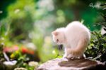 블링블링한 아기 고양이들