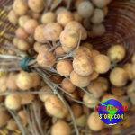 Brasil 북쪽의 과일들 - Pitomba