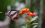 [가평 /이화원 / 나비스토리] 나비를 만날 수 있는 식물원,,, 이화원 # 가평 이화원 나비스토리 식물원 2017
