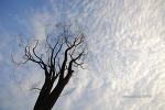 가을하늘 (2008.9.20)