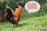 닭이 길을 건너간 게, 작년인가 재작년인가요?