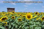 여름에 즐기는 꽃놀이? 봄꽃과는 또다른 매력인 여름꽃 보러 가기 좋은 여행지 추천