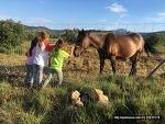 스페인 고산, 동물 사랑하는 우리 집 딸내미들