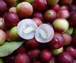 카무카무 부작용 가루 먹는법 다이어트 효능 효과