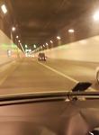 거제 벨버디어 거가대교를 지나는 터널에서 한 컷..