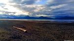 알래스카에서 나는 약초들