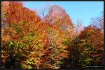 [캐나다 로드트립 - 8] 온타리오의 단풍 명소, 알공퀸 주립공원 ②