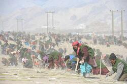 티베트 불교,  인도 라다크에서 '동시에 나무 많이 심기' 기네스북 기록 세워