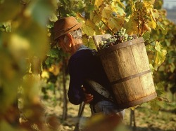토카이 에센시아 - 최고의 와인