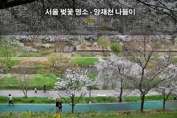 서울 벚꽃 명소 - 양재천 벚꽃 나들이 (2017.04.09)