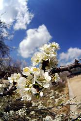 또 봄.....