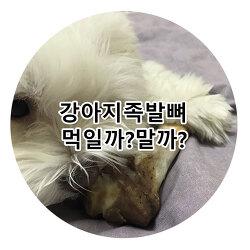 강아지족발뼈 먹어도될까요?