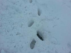 강원도 어느 농가에 내린 눈폭탄... 눈... 2014.02.08