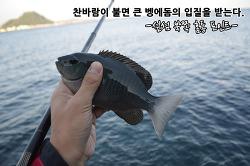 늦가을 대물 벵에돔 시즌의 시작. 제주 벵에돔낚시 조행기-섶섬 북쪽 홈통 포인트-
