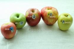 채소 과일 가격식별코드(PLC), 미국 현지 보고서