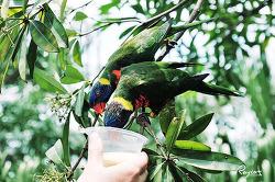 아시아 최대 새공원 싱가포르 주롱 새공원