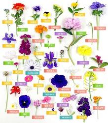 에버랜드 봄꽃, 너의 이름은?