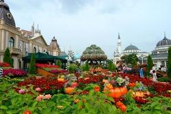 가을을 느끼고 싶다면? 가을꽃 풍성한 에버랜드가 정답!