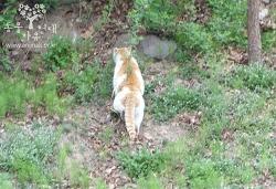 [길고양이] 양재동 올무 고양이 구조 [충격주의]