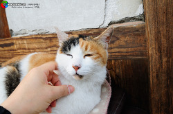 인사동 고양이, 점순이