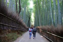 나고야에서 교토로 - 텐류지, 치쿠린(竹林)