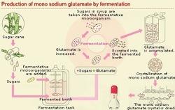 [건강정보] 화학 조미료 MSG의 진실에 대해 알아보자.