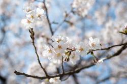 어린이 대공원 봄꽃 구경 나들이