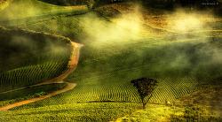 고랭지배추밭의 아침