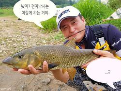 [누치 낚시, 남한강 여울 견지낚시] 폭염 속 최고의 피서 낚시는 이것