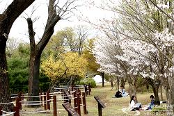 인천 서구 시천공원의 주말풍경