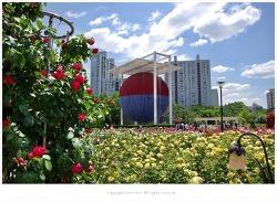 올림픽공원 장미축제 장미광장 도심속 장미꽃 향기