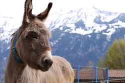 스위스 동물의 삶