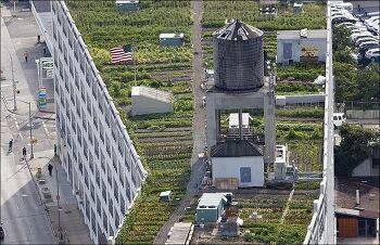 흔한 뉴욕 건물의 옥상 도시 한복판에 이런게?