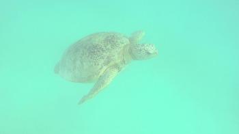 쁘렌띠안섬에서 바다거북이와 스노쿨링을!!!