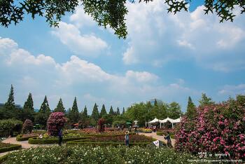 창원 장미공원, 계절의 여왕 5월 장미와의 데이트