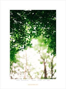 [5D] 숲 속 에서