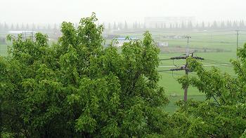 [ASMR] 장마 (Rainy Season)
