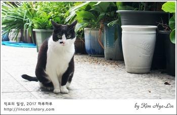 [적묘의 고양이]무채색 자매,노묘들의 아침 산책