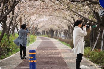 대저 생태공원 유채꽃밭과 벚꽃터널에서 - photo by day