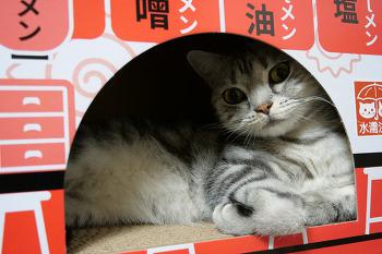 인기 만점 고양이 라멘박스