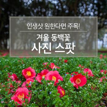 인생샷 원한다면 주목! 겨울 동백꽃 사진 스팟