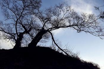 공산성의 나무들