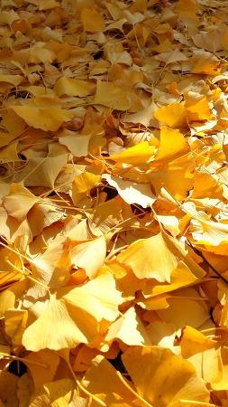 그래도 아직은 가을