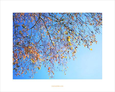[PEN-F] 가을빛 초겨울
