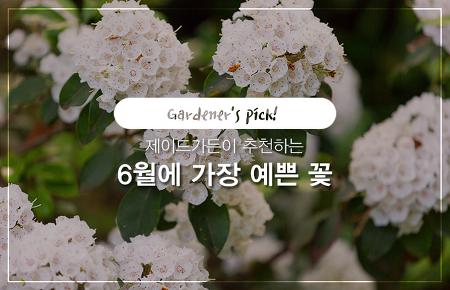 제이드가든이 추천하는 6월에 가장 예쁜 꽃