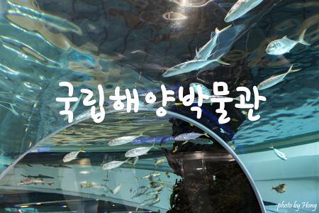 [부산 여행] 세계 최초의 종합 해양박물관 부산국립해양박물관